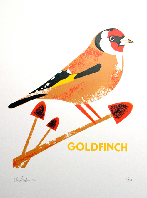 andrews_goldfinch_in